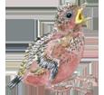 Mésange bleue oisillon - plumage 1