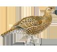 Coq de bruyère adulte - plumage 17