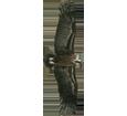 Vautour moine adulte - plumage 51