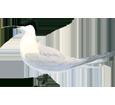 Sterne caugek ##STADE## - plumage 5