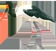 Jabiru ##STADE## - plumage 34