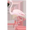 Flamant rose ##STADE## - plumage 68