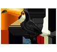 Toucan ##STADE## - plumage 46